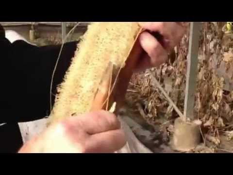 ▶ Sobre la lufa, por Josep Pamies - YouTube