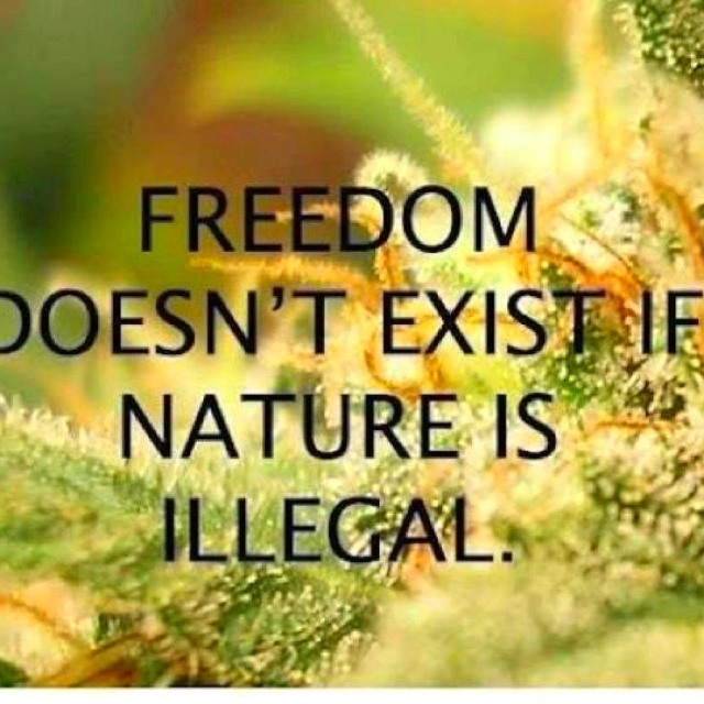 FREEDOM DOESN'T EXIST IF NATURE IS ILLEGAL.