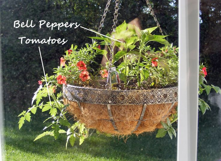 Great Gardening Idea    Hanging Basket Of Peppers And Tomatou0027s For A  Mothers Day Gift