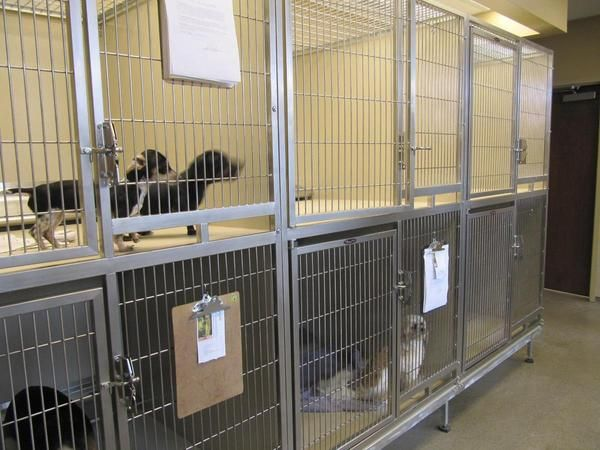 Metal Shelter Cat Kennels : Best animal holding images on pinterest cat condo