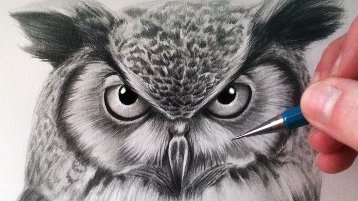 How to Draw an Owl by LethalChris Drawing
