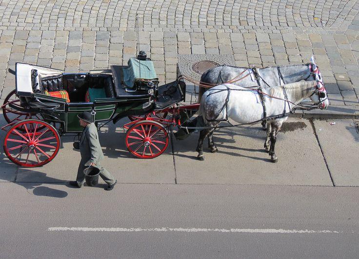 KÖNIGLICHES WIEN #kutsche #fiaker #pferde #wien #österreich #sightseeing