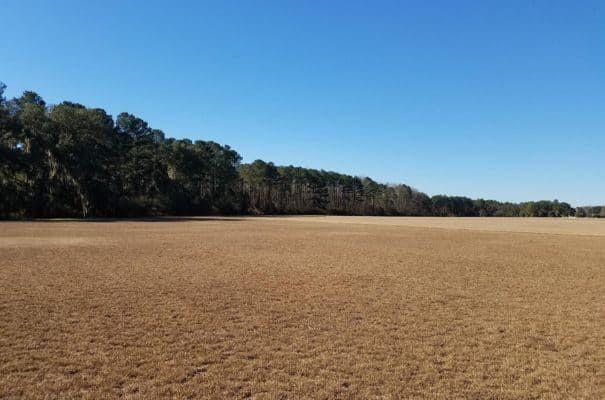 Pristine Irrigated Farm Land in Georgia -blog.landflip.com #realestate #farmland #Georgia #agriculture #land