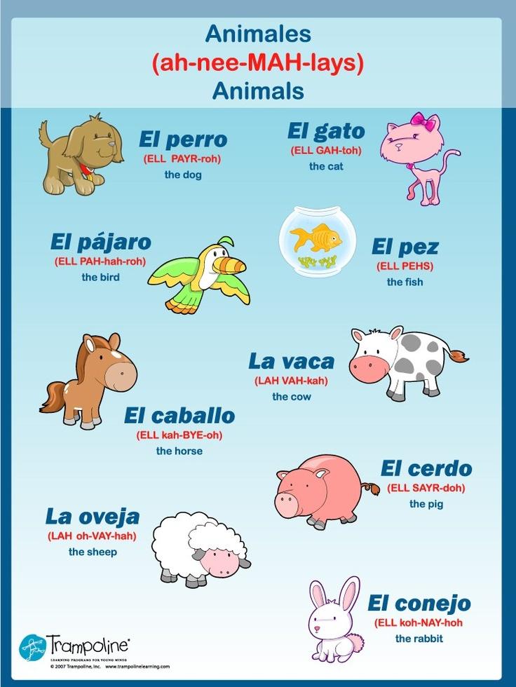 Vocabulary Animals Learn to Speak Spanish Pinterest