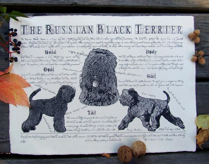Antique styled dog standard - Russian Black Terrier by Creativedoglover on Etsy