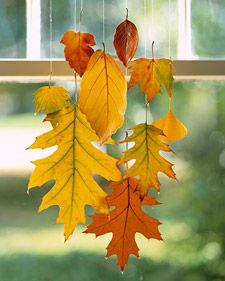 Hanging Leave- When dipped in wax, colorful leaves can be preserved through this season and beyond. We clustered a group to suspend in a window -- perfect for greeting visitors. Stands of monofilament keep them from falling a second time.