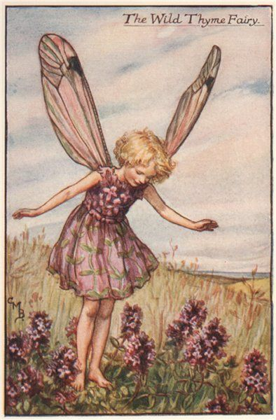 FLOWER FAIRIES/BOTANICALS: The Wild Thyme Fairy; This is an original vintage Cicely Mary Barker Flower fairies colour print. It is not a modern reproduction, c1935; approximate size 11.0 x 7.0cm, 4.25 x 2.75 inches