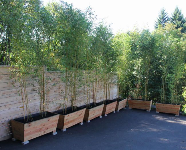 Bamboo Planters - Extra privacy screen with out the chance of bamboo going crazy.