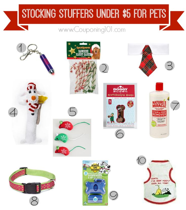 10 Stocking Stuffer Ideas For Pets For 5 Or Less