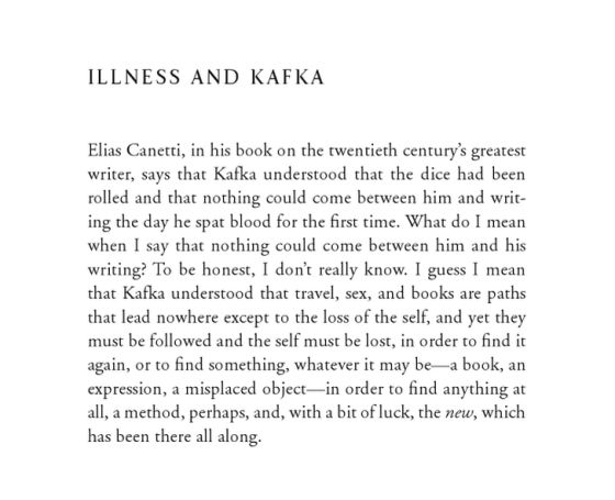 Sample Essay about Metamorphosis essay help The Trial by Franz Kafka   WordPress com    The Metamorphosis    by Franz Kafka Essay