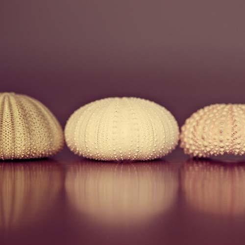 Seashell Photo AmellaKayPhotography ETSY