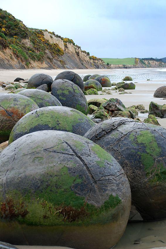 If you go down to Koekohe beach in New Zealand you can be sure of a big surprise. In front of you, scattered like enormous marbles from some long abandoned game between giants, are hundreds of giant spherical rocks. Or are they the egg shells of sea-born dragons? The Moeraki boulders present us with a mystery – what are they and how on earth did they get there?