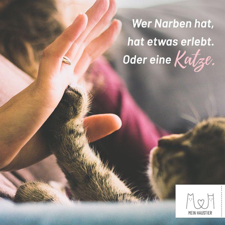 Und trotzdem lieben wir sie! ♥️ #katzenliebe #meinhaustier #katzen #sprüche…