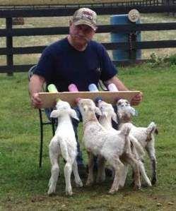 Bottle Feeding Katahdin Lambs Town Creek Katahdins