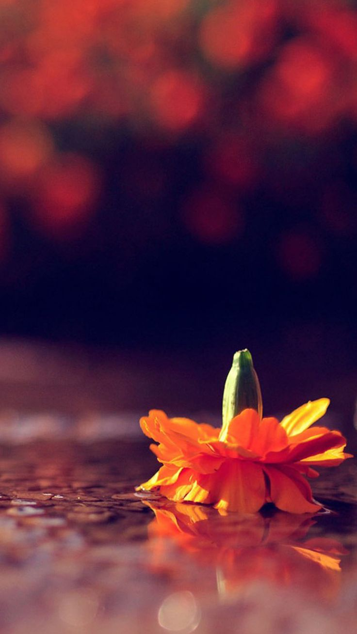 Handstand Flower Bokeh iPhone 6 wallpaper