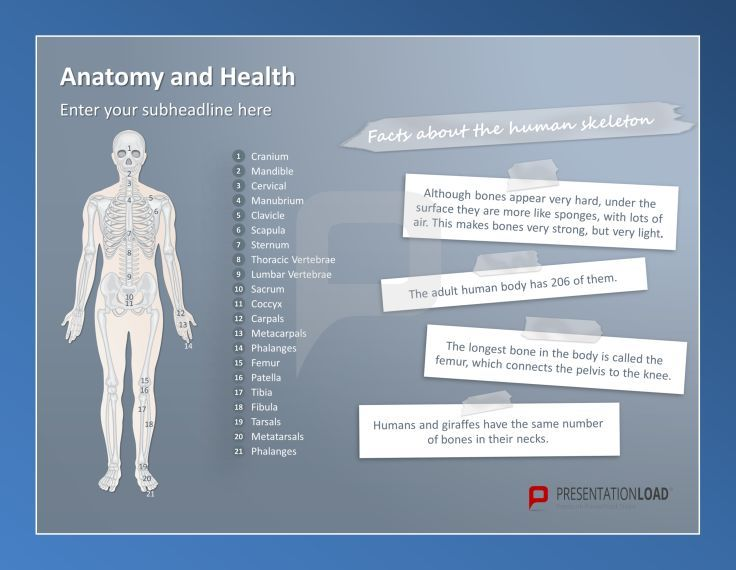 You need useful templates for your anatomy or health presentations? Then take a look at our free PowerPoint Templates. http://www.presentationload.com/free-anatomy-powerpoint-templates.html