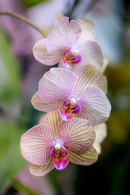 Orchids | by JMS2                                                                                                                                                                                 More