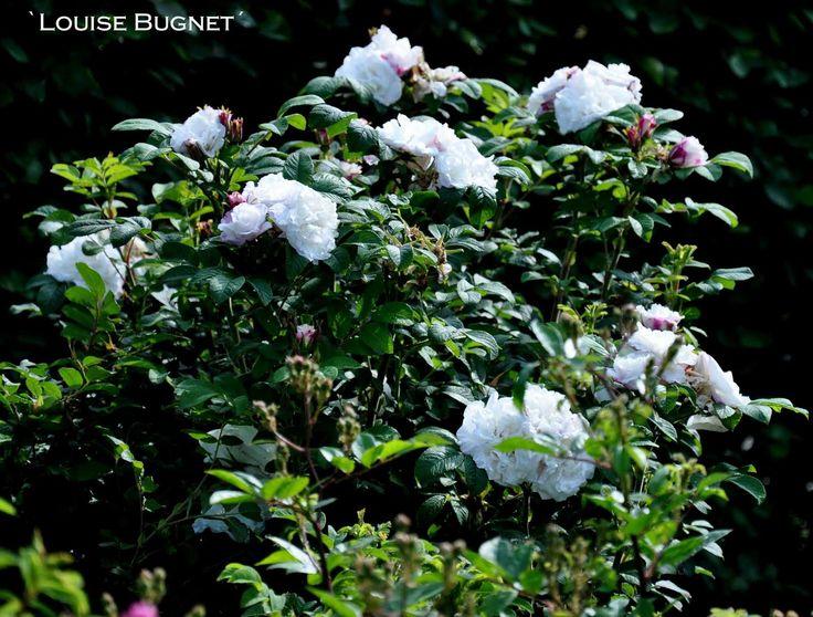 %60Louise-Bugnet%C2%B4-4.jpg 1600 × 1215 pixlar