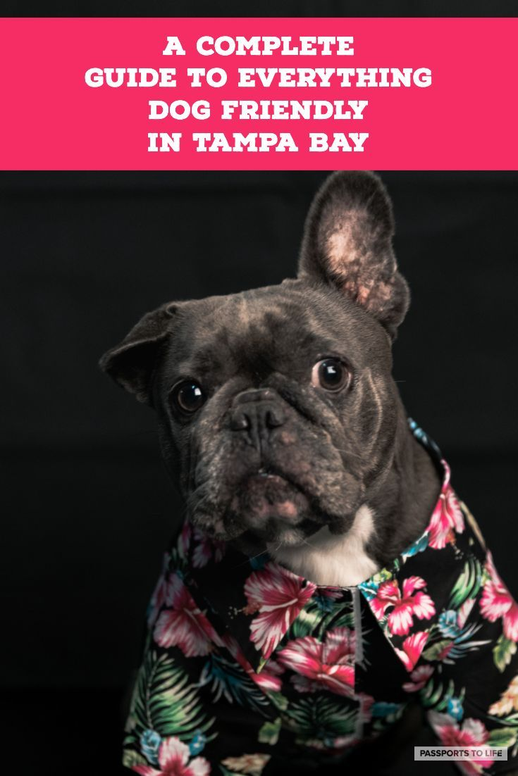 5 Best Dog Friendly Activities In Tampa Bay Dog Friends Dog Friendly Beach Tampa