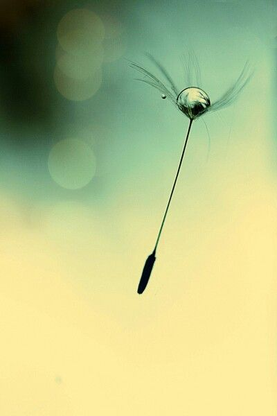 Let a dandelion carry your tears away and make your wish come true.