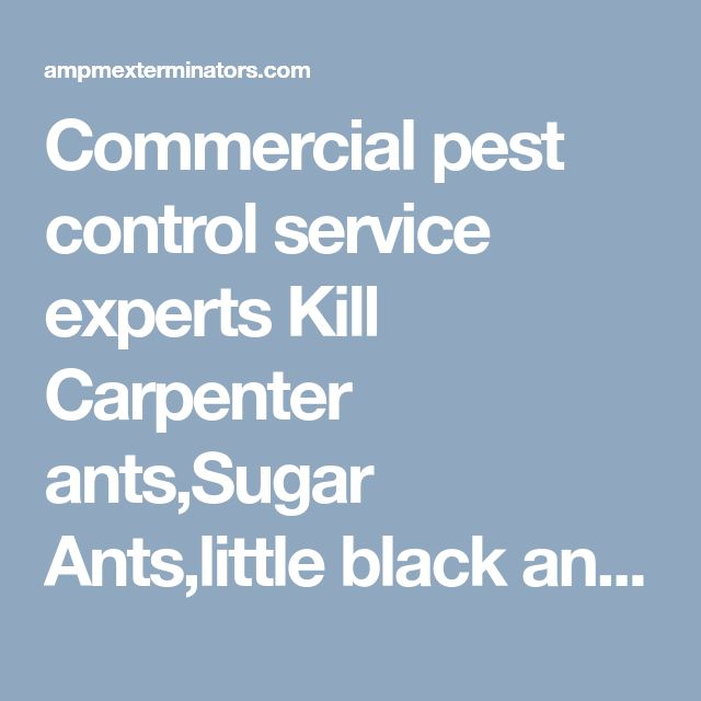 """Commercial pest control service experts Kill Carpenter ants,Sugar Ants,little black ants in kitchens, bathrooms.Infestation Problems with species of ants referred to both Pharaoh and Pavement ants as sugar ants.These critters eat sugar, sweets, and other scraps of food. This is why we call them sugar ants.Little black ants have also garnered the name """"sugar ant,"""" though their real name is, well, Little Black Ants. Not a lot is known about Little Black Ants, except that they eat just about…"""