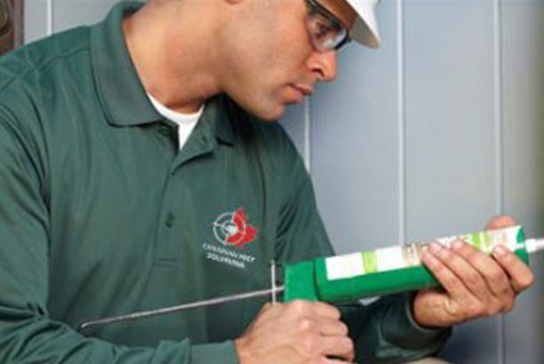 Canadian Pest Solutions Offers The Best Commercial Pest Control London On Pest Solutions Best Commercials Canadian