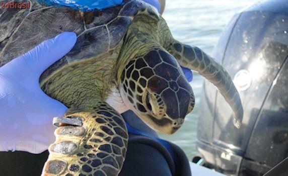 Pesquisadores monitoram tartarugas marinhas no Paraná