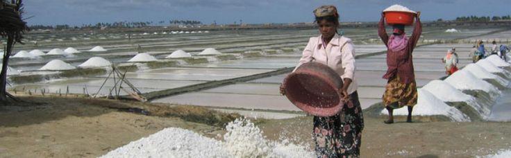 Best 25 prawn farming ideas on pinterest tilapia fish for Fish farm near me