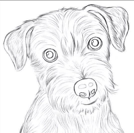 How to draw a dog step by step?