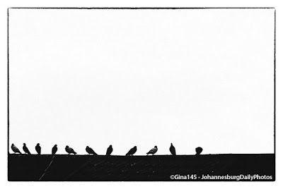 Johannesburg Daily Photos: Birds on the Roof