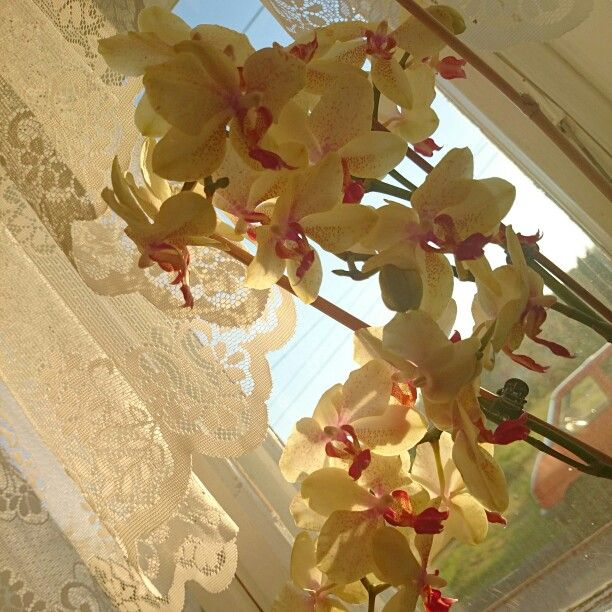 One of my beautiful orchids