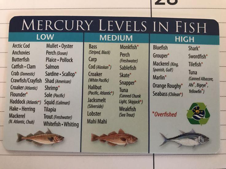 mercury levels in fish  butterfish fish