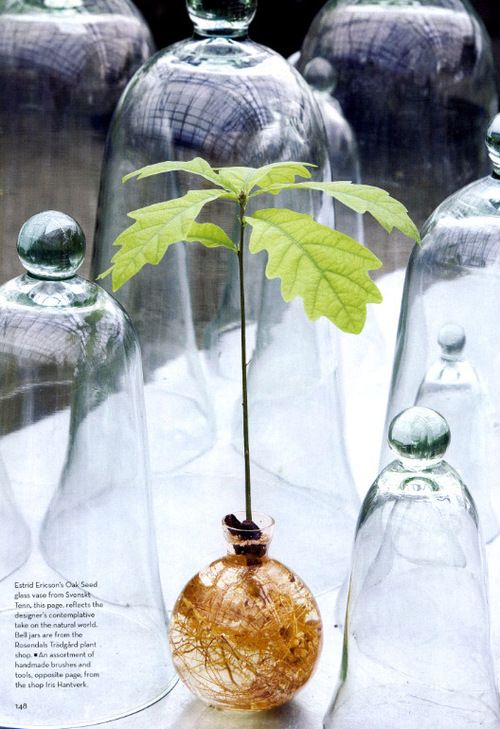 Beautiful vase that allows an acorn to grow in all it's glory....
