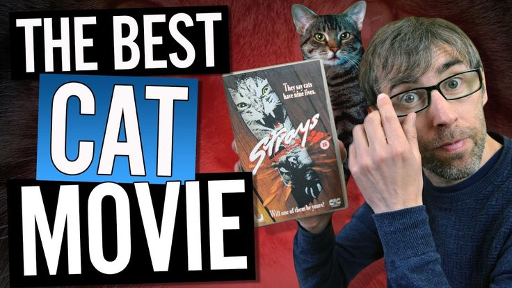 The best Cat movie according to Cats, I ask my feline pet friends what is the kitty movie of choice for cats to watch. What makes their whiskers tingle with ...
