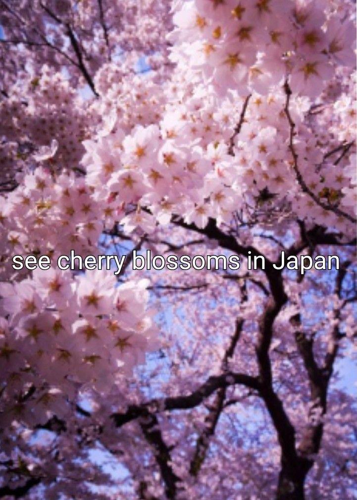 Bucket List Nature Photography Flowers Blossom Trees Cherry Blossom Tree