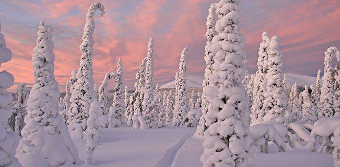 Pallas - Yllästunturin kansallispuisto - Luontoon.fi