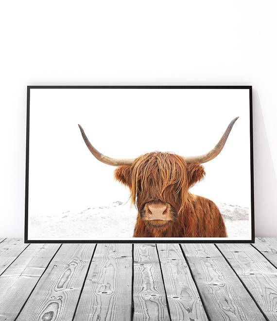 Highland Cow Print | Scottish Cow | Prints for Walls | Modern Art Prints |Highland Cow Wall Art | Scottish Highlands | Highland Cow Photography Print | Scottish Decor | Scottish Art | Cow Art | Scottish Gift | Animal Photography. Art Prints for the Home by Little Ink Empire on Etsy.