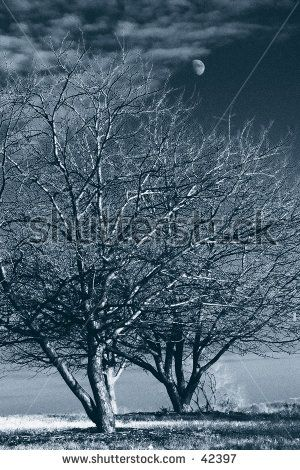 Tree Monotone Stock Photos, Images, & Pictures | Shutterstock
