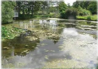 Great article/site on pond maintenance and how to clear up algae