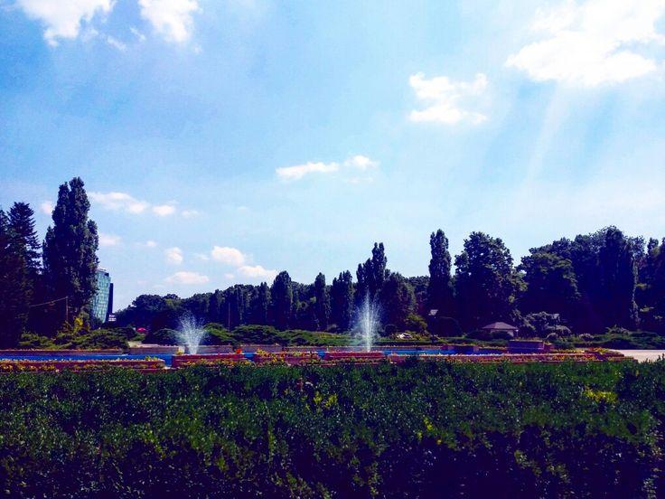 Herastrau in a summer afternoon