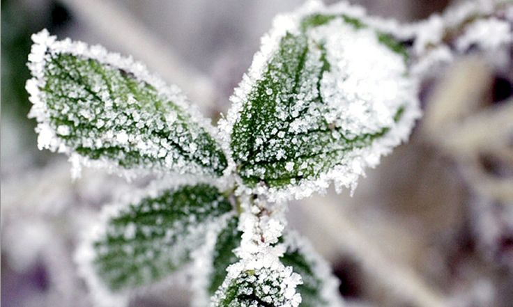 Vinterfixa i trädgården i 7 enkla steg - Sydsvenskan