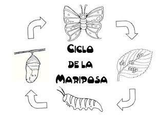 Menta Más Chocolate : Ciclo de la Vida de una MARIPOSA