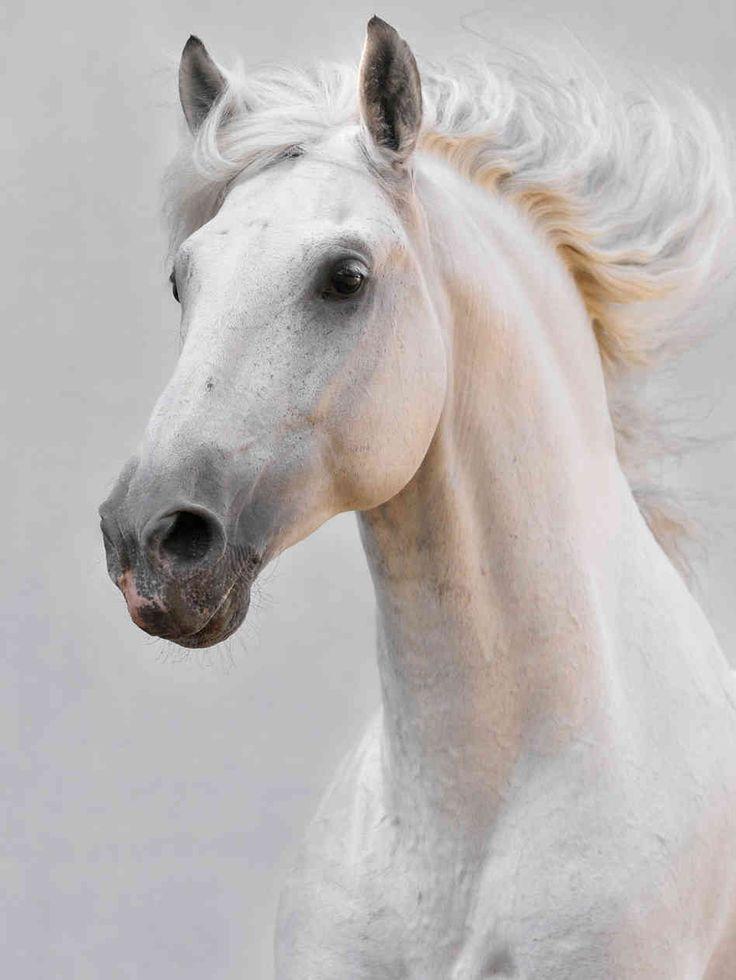 horse face photos | Makarova Viktoria via iStockphoto.com