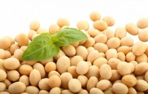 The Wondrous Benefits of Soy Protein