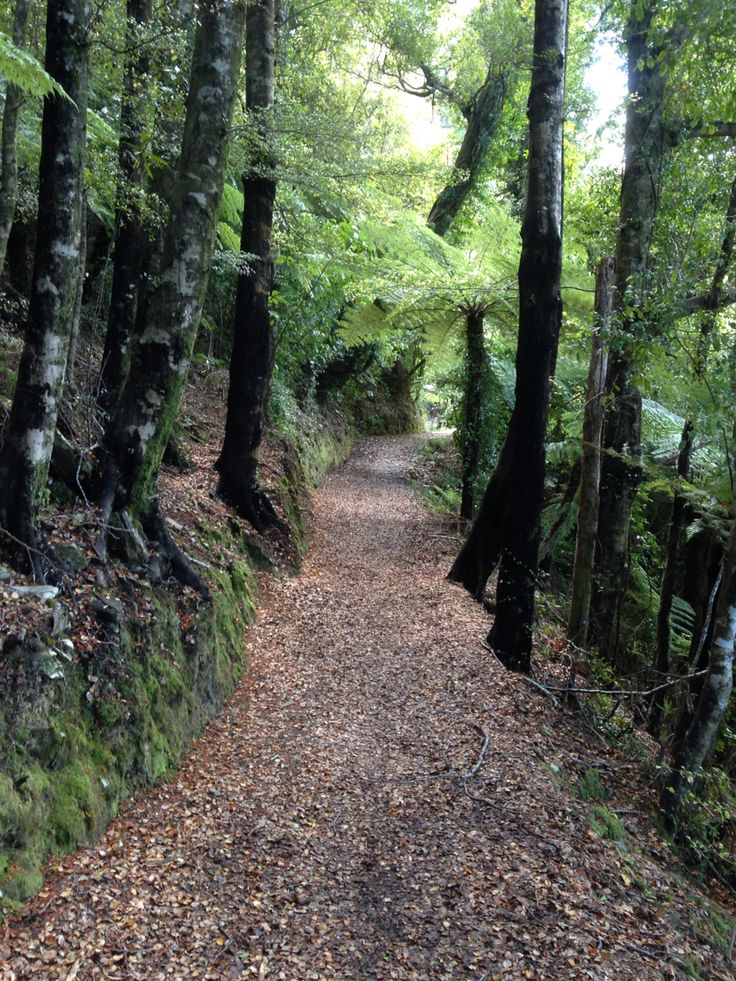 Day 3 on the Track....mystical and enchanting forests....