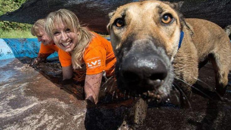 """Llega el desafío del barro .... el """"Muddy Dog Challenge"""". ¿Estaríais tu perro y tú preparados? #uk #reinounido #dog #dogs #foto #fotos #perro #perros #animales #animal #mascota #mascotas #cachorro #cachorros #noticia #noticias #schnauzi #carrerera #carreras #runners #runner"""