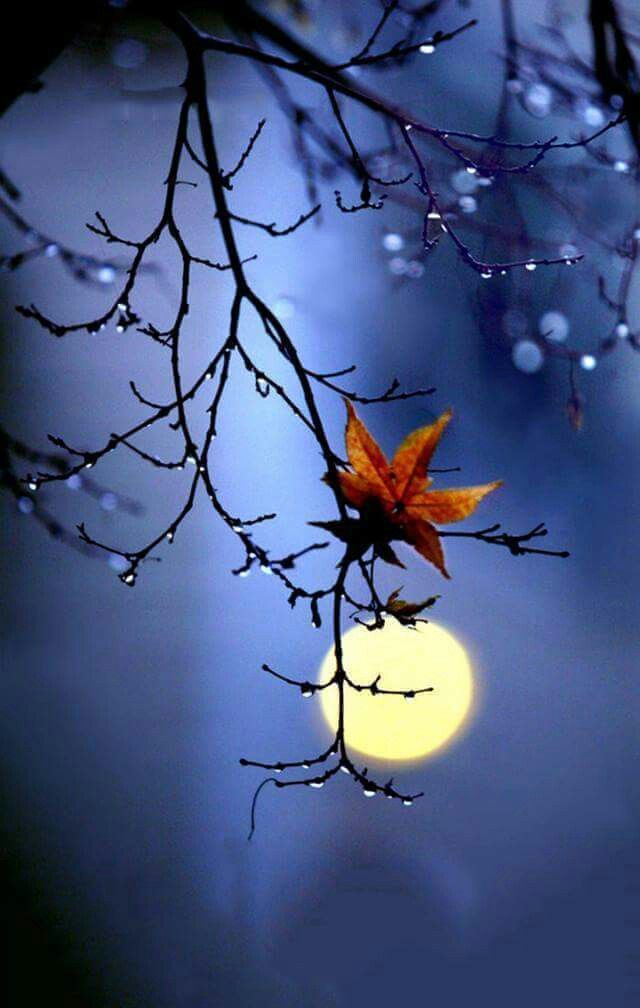 Картинки спокойной ночи красивые креативные осенние