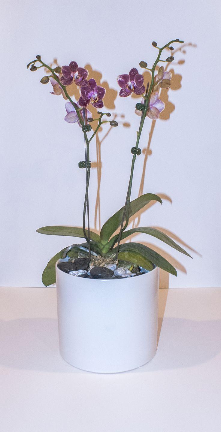 Best 20 Orchid Pot Ideas On Pinterest Orchids Orchids
