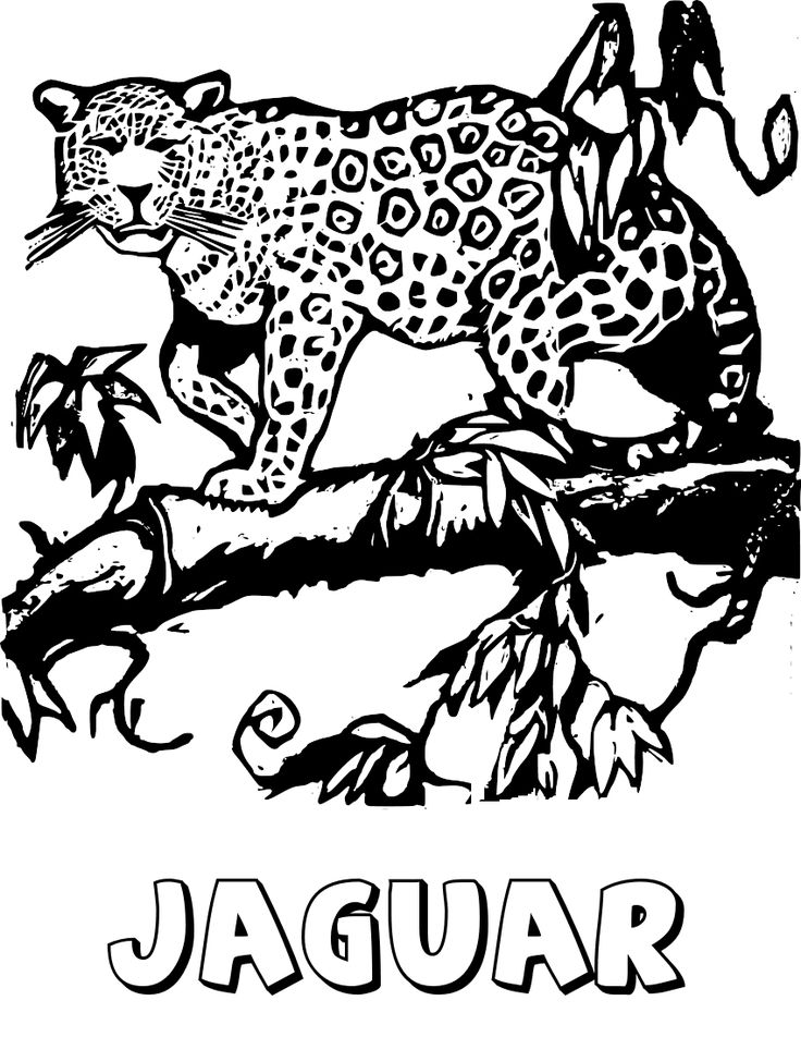 24 jaguar coloring pages animal printables