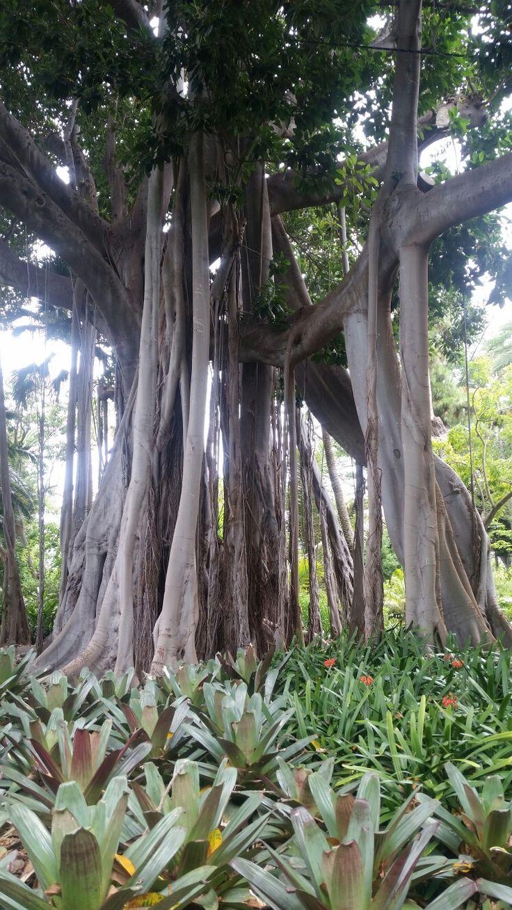 Jardin botanico de Tenerife